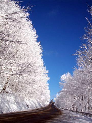 winter-tree-path